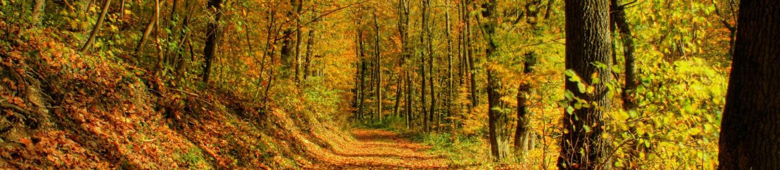 autumn_forest