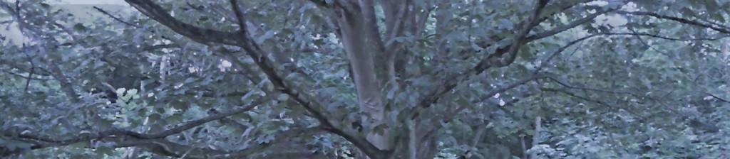header_0271_trees_1650x350